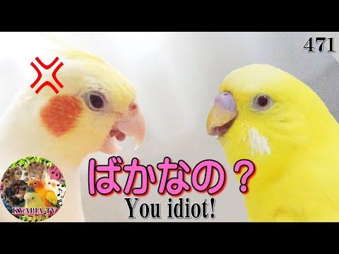 勝ち誇り煽りまくる鳥w