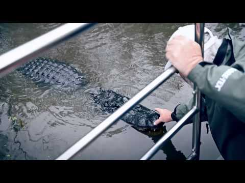 Alligators of New Orleans: the real experience