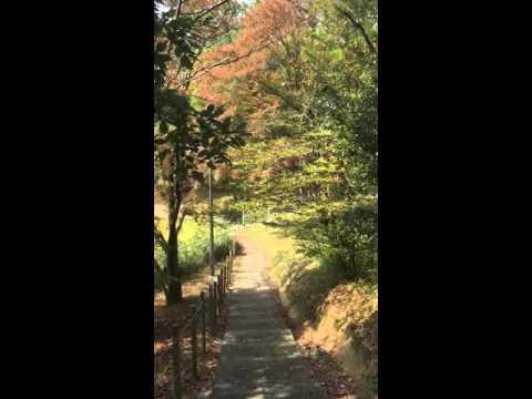 Autumn in Osaka University Toyonaka Campus