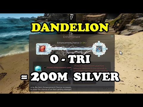 BDO | Dandelion +0 to TRI Costing ONLY 200 Million Silvers