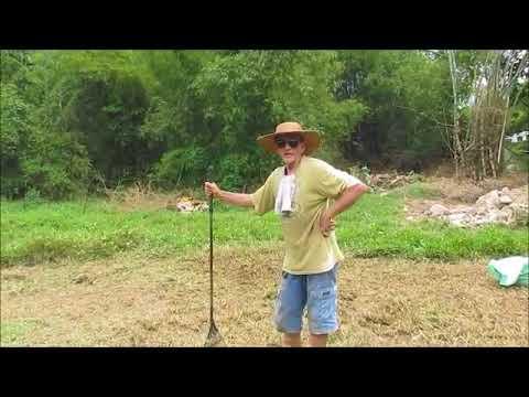 The Mulch Master Phillip Expat Philippines