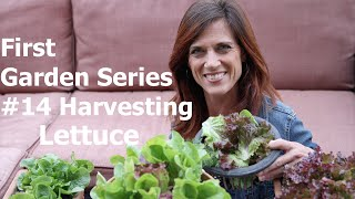 First Garden Series #14 - Harvesting Lettuce and First Garden Salad!