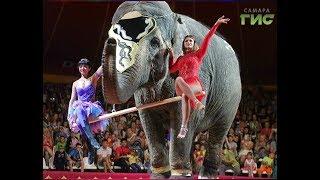 В самарский цирк привезли новую программу с участием самых больших животных на земле - слонов