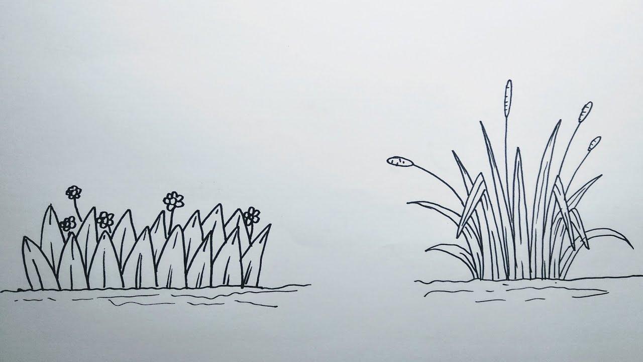 Cara Menggambar Rumput