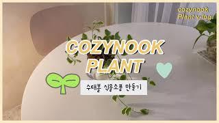 수태볼 소품 만들기 / 식물인테리어소품 / 울산꽃집