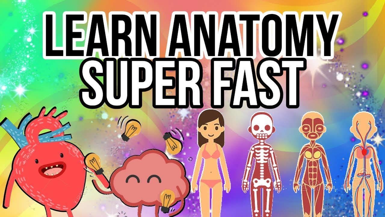How To Learn Human Anatomy Quickly And Efficiently Youtube