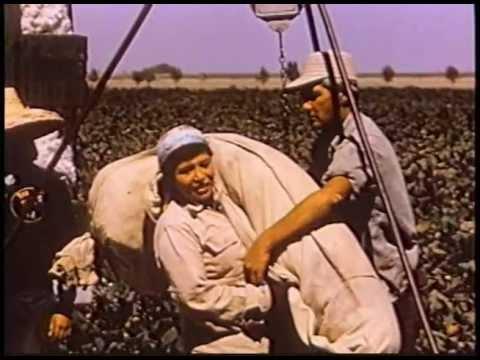 Factory Farms in California, 1959