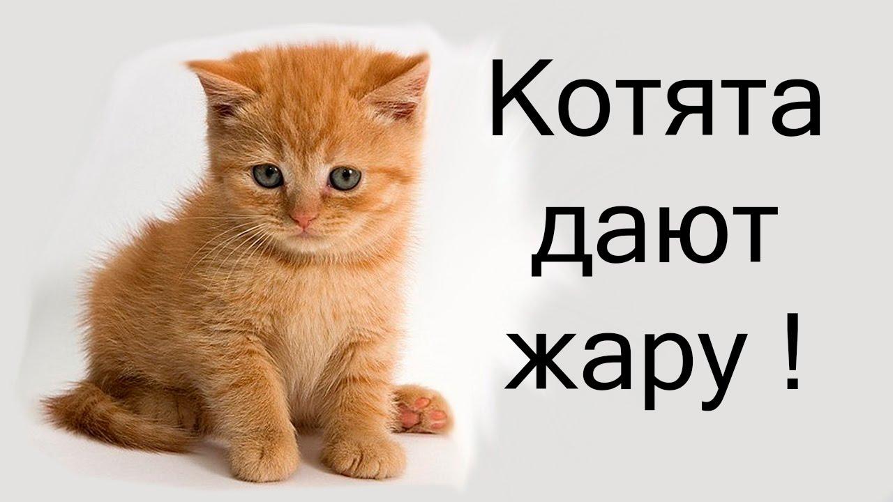 Strikeforce kitty league youtube
