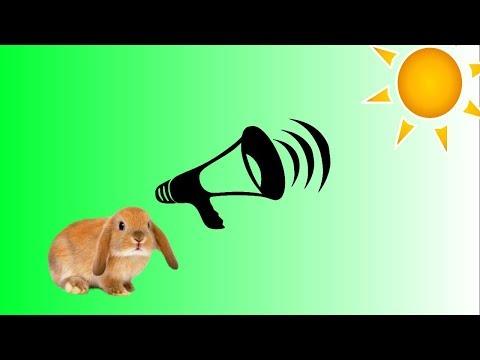 Вопрос: Каким звуком подозвать белку?