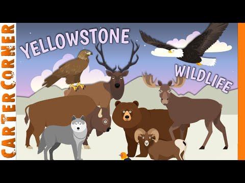 Animals of Yellowstone! | Travel With Kids