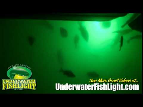 Perch on Lake Norman - Underwater Dock Lights & Perch on Lake Norman - Underwater Dock Lights - YouTube