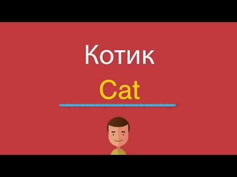 Как будет по английски котик