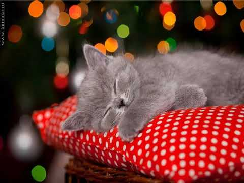 Красивое видео. Доброй ночи! Приятных сновидений!