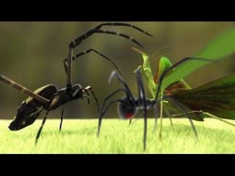 Praying mantis vs Black widow spider attack - YouTube