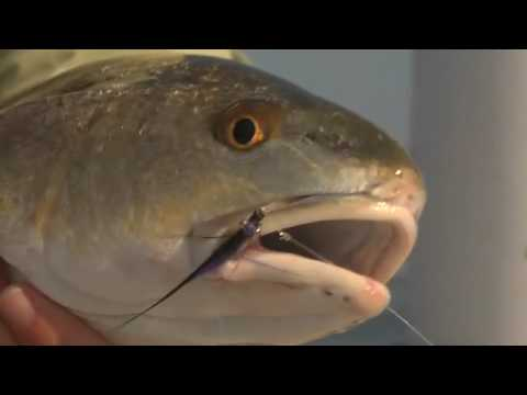 Fly Fishing for Redfish & Black Drum with Capt. Todd Fuller - Orlando, Florida