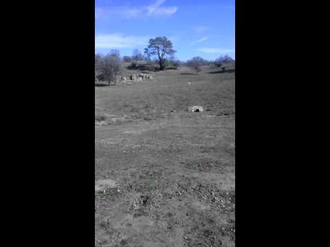 tannerite-fun-with-coyote
