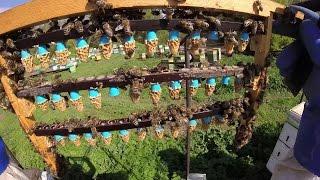 Дневник пчеловода - Замена маток. Субботник(Плановая замена маток на пасеке на племенных из Германии. Субботник с местными жителями на местном кладбищ..., 2016-05-23T15:14:08.000Z)