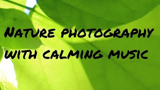 Nature photography with relaxing music  Classical piano &amp calming birdsong  Meditation music 2020