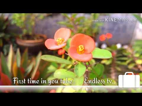 তুমি সুন্দর তাই চেয়ে থাকি প্রিয় সেকি মোর অপরাধ   (নজরুলগীতি) thumbnail