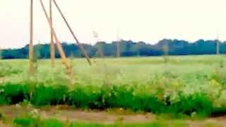 купить участок в Ленинградской области в ДНП Оржицы(, 2014-06-29T12:30:10.000Z)