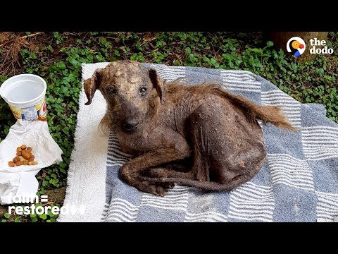download Rescued Street Dog Is Unrecognizable Now | The Dodo Faith = Restored
