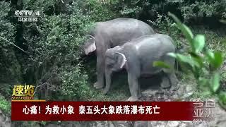 [今日亚洲]速览 心痛!为救小象 泰五头大象跌落瀑布死亡| CCTV中文国际