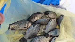 Волгоград! Рыбалка в Приволжском!!!