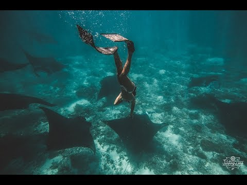 Freedive with a mantas in Flores. Padar Island. Manta point. Indonesia. Mp3
