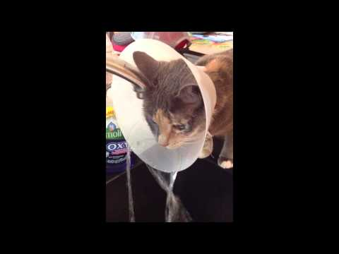 Smart Cat Knows How To Make The Best Of Bad Situation!s