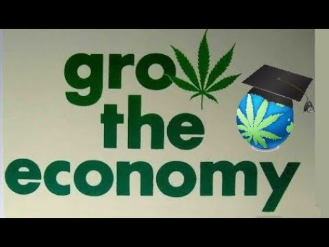 Start A Career In Cannabis - How To
