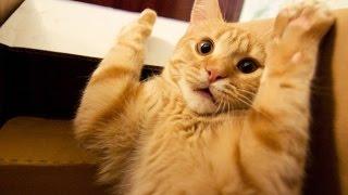 Перепуганные коты
