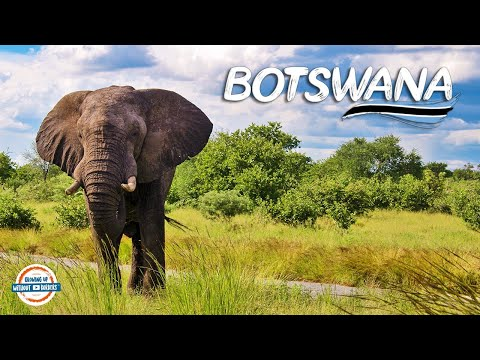 Botswana - Where Animals Roam Free! | 90+ Countries With 3 Kids
