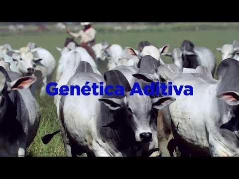 Teaser 17º Mega Leilão Genética Aditiva 2020