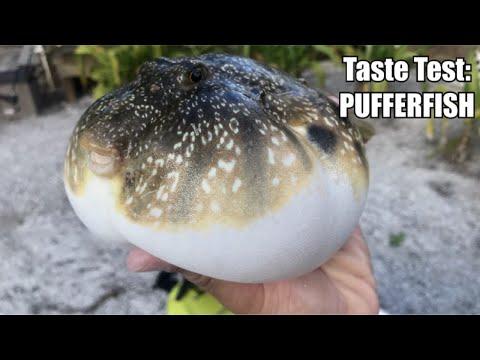 The 'Deadliest' Catch & Cook: PUFFERFISH!!! (FUGU)
