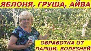 видео Парша яблони и груши