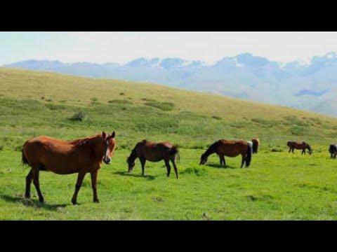 Жара в Казахстане и Таджикистане и сезон кумысолечения в Кыргызстане