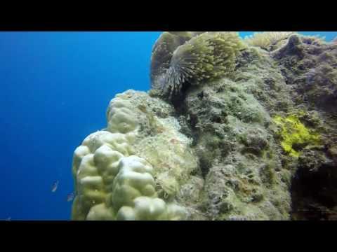 Diving at Pramuka Cyber Island - Jakarta
