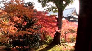 京都紅葉・東福寺【TOFUKUJI TEMPLE】