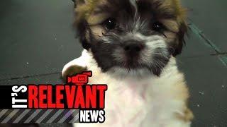 Norwalk Pets Of The Week