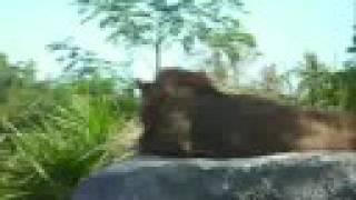 besakih-temple-2 Safari Tour Bali