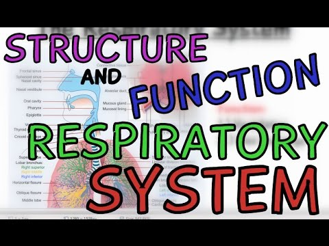 Biology Help: Structure and Function of The Respiratory System