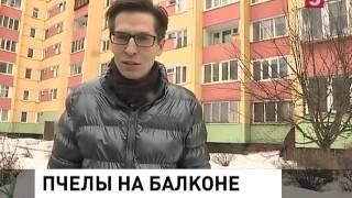 видео Улей на балконе!