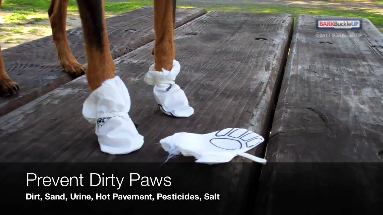 NooBy Disposable Dog Booties - YouTube 3c4d62e98f18