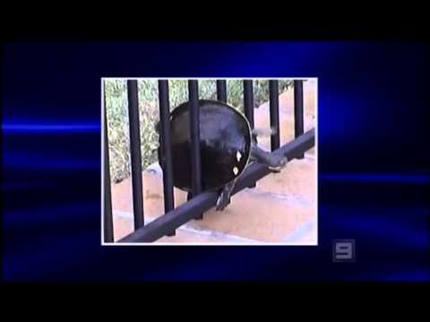 2007 09 22 Australia's Funniest Home Videos