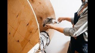 Chinchilla Real Fur | Chinchilla Fur Dressing | Выделка Шиншилловых Шкурок | Мех Шиншиллы