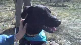 *adopted* Larry 7288364 Humane Society Colorado Adoption