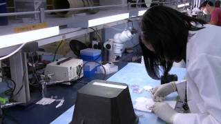 Loma Linda University Integrated Biomedical Research Program - Student Stories