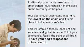 Discover The Most Important Dog Training Tip