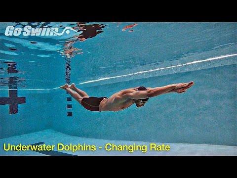 Underwater Dolphins - Increasing Rate
