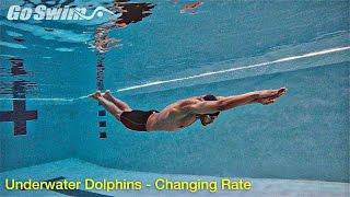 Video Underwater Dolphins - Increasing Rate download MP3, 3GP, MP4, WEBM, AVI, FLV Juli 2018